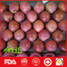 china supplier 2015 factory price fresh fuji apple