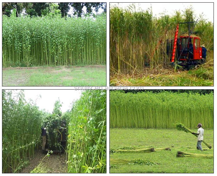 Shuliy March Exp lake reed sorghum harvester Jute Kenaf harvesting machinery