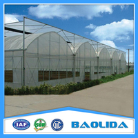 Galvanized Steel Structure Arch Roof Greenhouse For Vegetables Covered By Single Layer Plastic Film