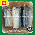 Canned Mackerel Fish in Brine Delicious Taste Nutritional