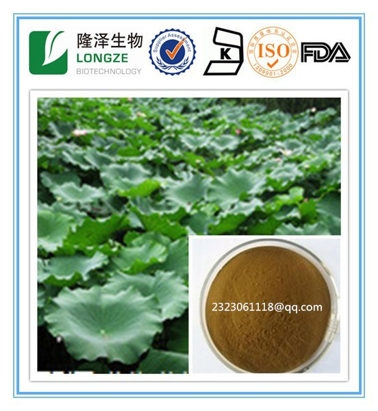 New Product Lotus Leaf extract Natural plant extract Nelumbo Flavone Nelumbo Alkaloids 2- 5% Lotus Leaf Extract