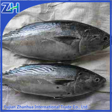frozen bonito fish bonito powder on sale