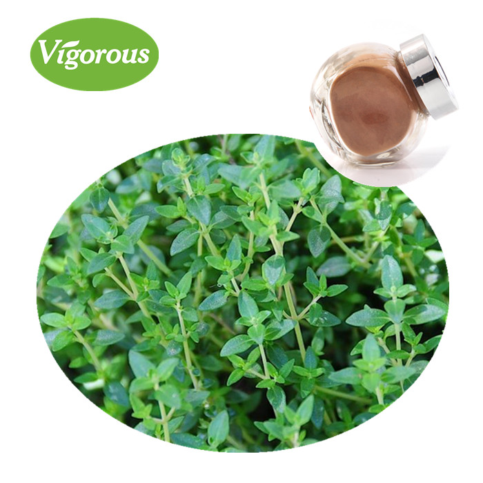 100% Natural thyme leaves extract powder Thymus vulgaris leaf extract