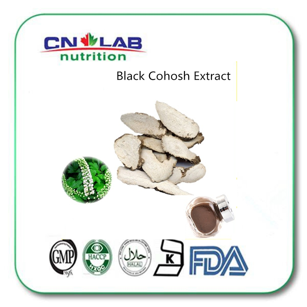 High quality Black cohosh root extract 5% 8% Triterpene Glycosides