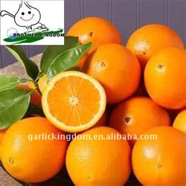 Hot!! Navel Orange