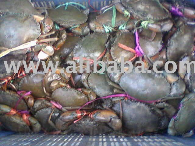 Live Mud Crab / Crab Meat