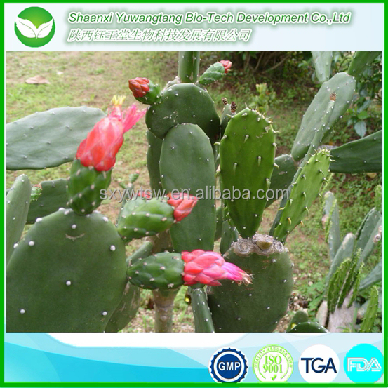 Best quality GMP wholesale cactus oil/prickly pear seed oil/oil prickly pear