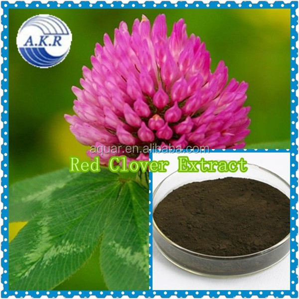 GMO manufacturer supply Red Clover Extract20%, 40% Total Isoflavones by HPLC