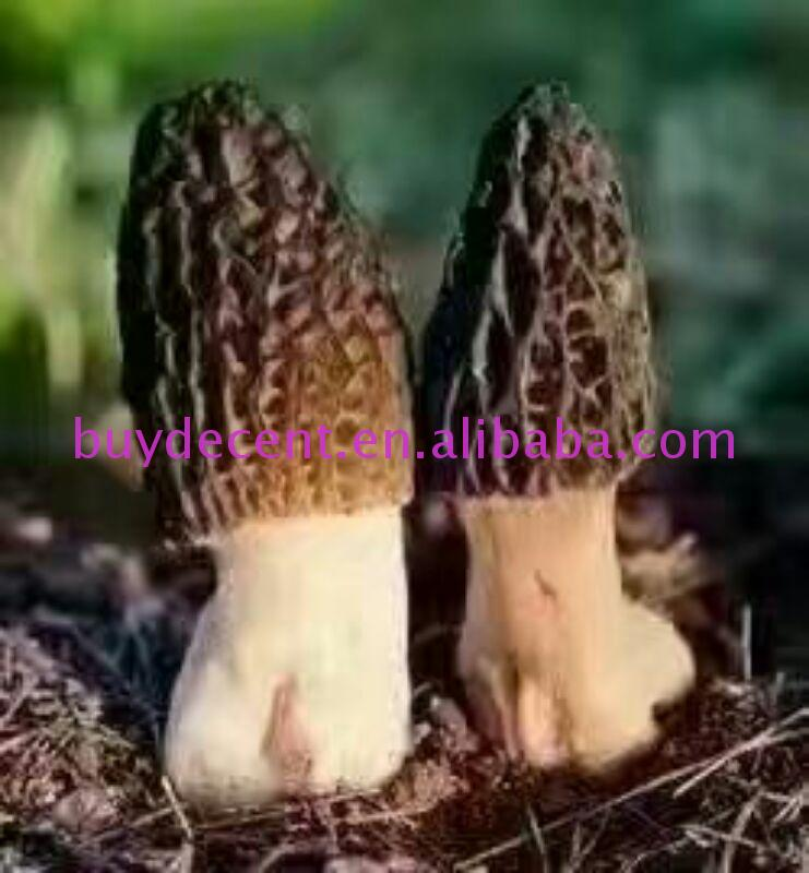 Well Priced herbal wild frozen mushroom type morel/morchella tonifying Yang Yunnan delicious With Best Quality And Service