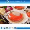 Alibaba Gold Supplier Frozen Sea Scallop With Roe