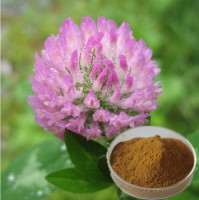 Hong Che Zhou high quality 100% Natural Red Clover Extract Powder