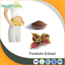 GMP factory supply pure forskolin extract