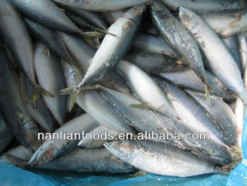 frozen pacific mackerel(200-300g)