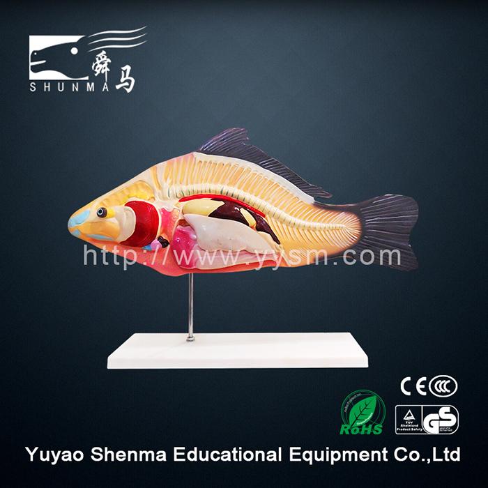 Professional Manufacturer Fish Anatomy Model Animal Model For ...