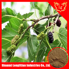Pure mulberry leaf extract 10:1 20:1with good quality