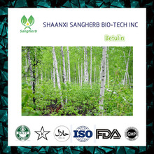 Free sample birch leaf extract, birch leaf extract powder, birch leaf powder Betulin