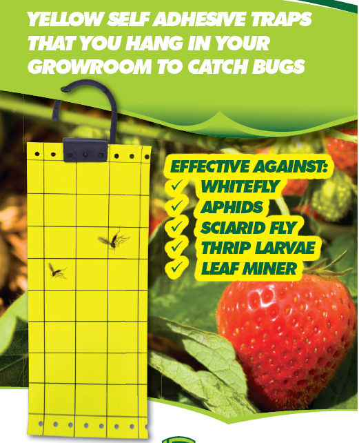 effective fruit fly trapr,professional adhesive insect trap,safe insect glue traps