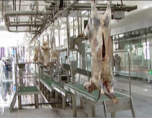 halal meat processing slaughterhouse