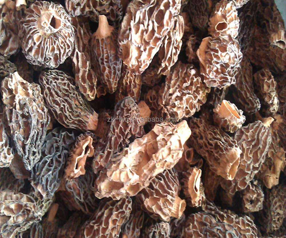 Dried Morel Mushrooms For Sale