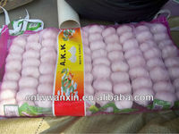 Fresh Garlic in Cold Storage