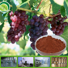Manufacturer directly supply grape seeds extract with Polyphenol 20% 80% 90% from ISO,BV,KOSHER Standard Factory