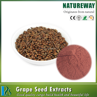 Hot Selling 100% Natural Organic 98% Proanthocyanidins (OPC) grape seed extract
