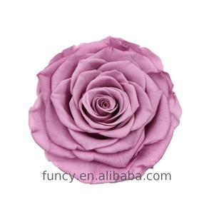 Preserved Natural Orchid Color 10 CM Big Size Eternal Rose Bud For Wedding flower wall