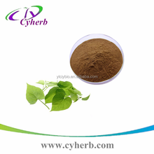 GMP supply Natural free sample sweet potato leaf extract 10:1 powder