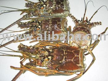 Frozen Florida Lobster Heads - Buy Lobster Product on Alibaba.com