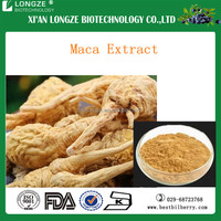 Maca extract powder for sexual enhance function for men with free sample anailable