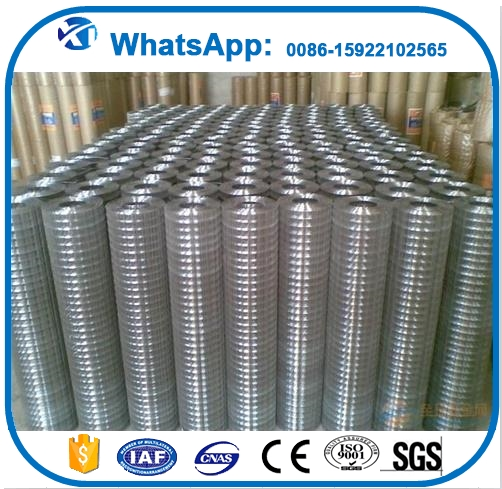 Brand new galvanized welded wire mesh buy used poultry battery cages for sale with factory price