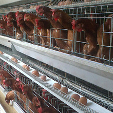 egg breeding chicken breeding cage equipment sale for bangladesh for chicken farm coop for hens prices