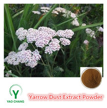 Natural Yarrow Dust Extract Powder