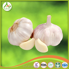 China Chinese supplier exporter manufacturer best quality competitive price fresh natural garlic