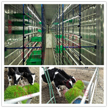 soilless culture system hydroponic trays animal fodder machine/ grass feed planting container