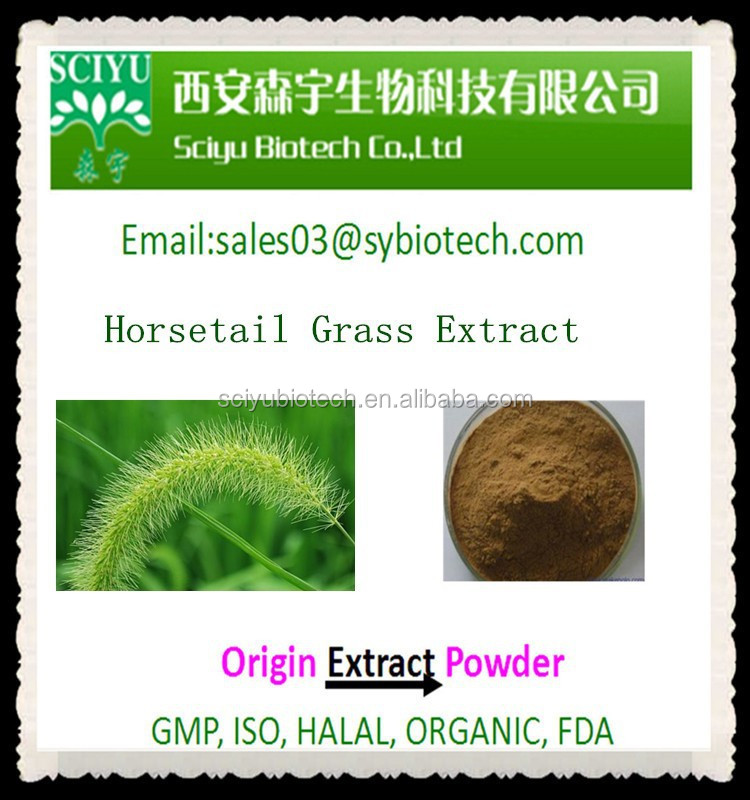 High Quality Horsetail Grass Extract Silica Powder 7% By UV