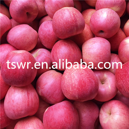 High Quality And Best Price Qinguan Apple