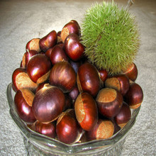 Grade A Organic Frozen Peeled Chestnut from China/Wholesale chestnut