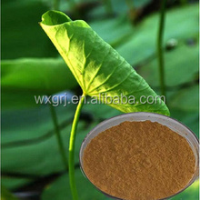 Factory Free sample Blue Lotus Leaf Extract Powd er 2%-98% nuciferinelotus leaf extract,lotus leaf powder extract