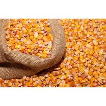 Yellow Corn ,Yellow Maize,Yellow Corn for sale
