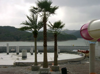 Large outdoor artificial coconut tree in theme amusement park fake coconut tree artificial palm tree