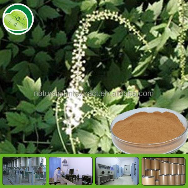 triterpene glycosides extract powder black cohosh p e