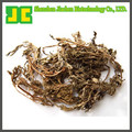 High quality Motherwort P.E