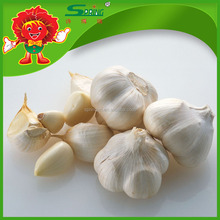 Highland White Garlic with Competitive Exporting Price