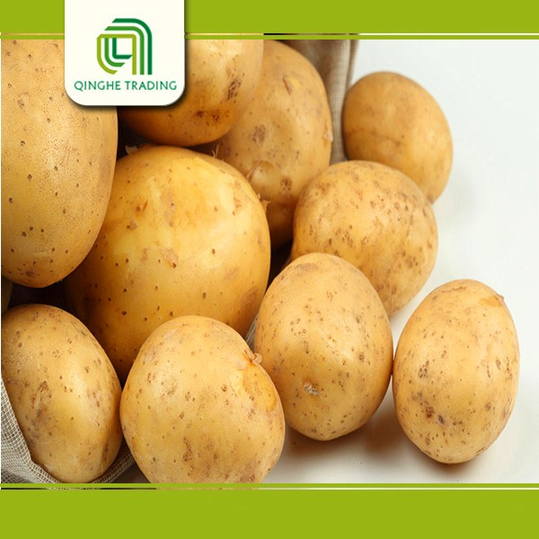 good quality fresh food fresh vegetable big potato from china