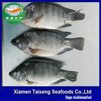 Best Fresh Frozen Tilapia Fish For Sale