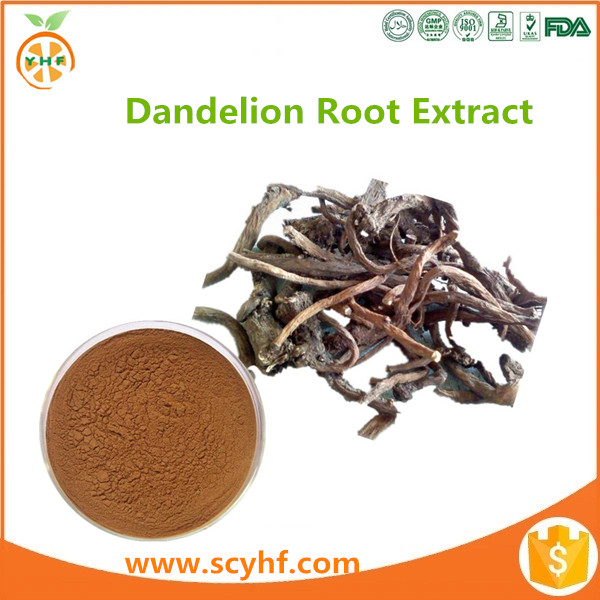 China manufacturer taraxacum officinale extract powder dandelion root for sale