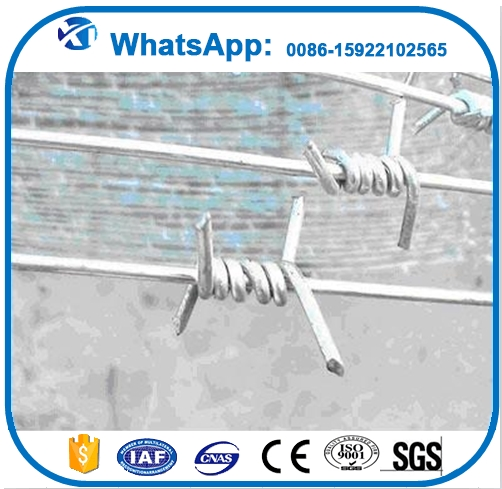 Professional barbed wire roll price fence concertinas manufacturer in China