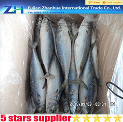sale of frozen herring mackerel ice fish frozen food bulk frozen foods