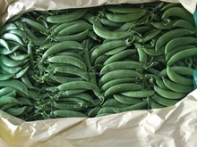 Fresh Sugar Snap Pea Export Standard